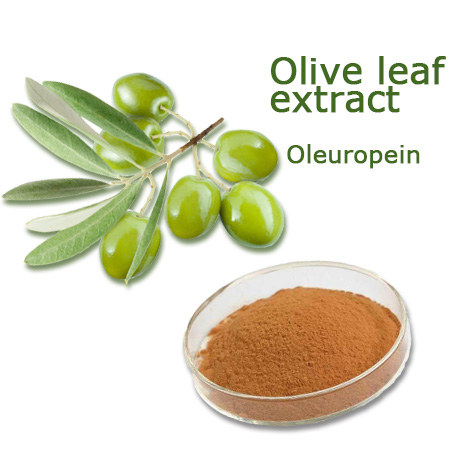 CO2 Extraction Of Oleuropein From Olea Europaea Leaves