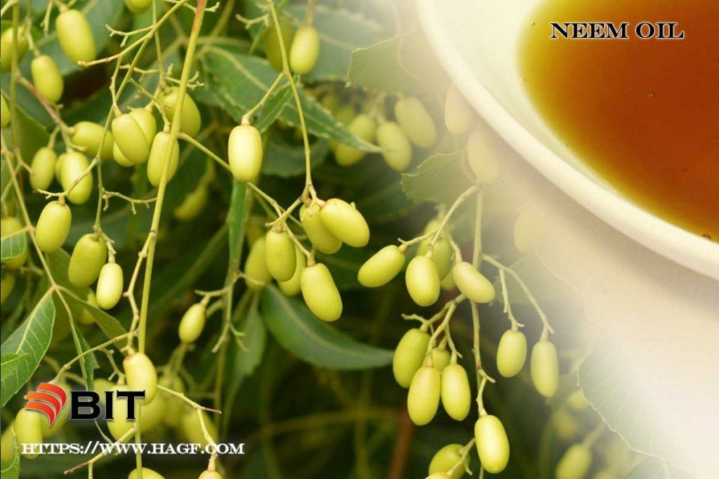 Supercritical CO2 Extraction of Neem Oil