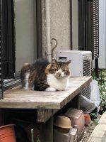 ホムセン箱MHB-460(RVBOX-460)に猫除けの「チクチク」を置く。