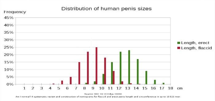 ¿Cuál es el aspecto del pene perfecto? Un estudio tiene la respuesta.