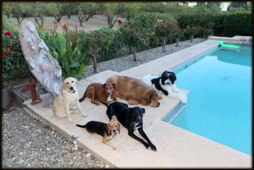 dog training classes sacramento