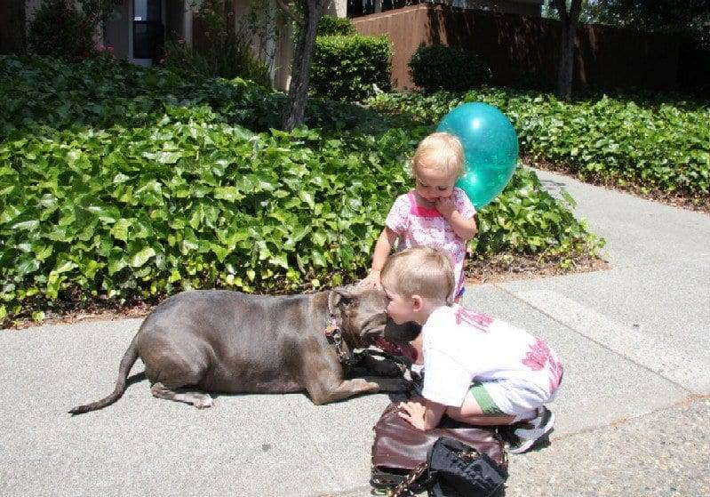 child with pit bull image