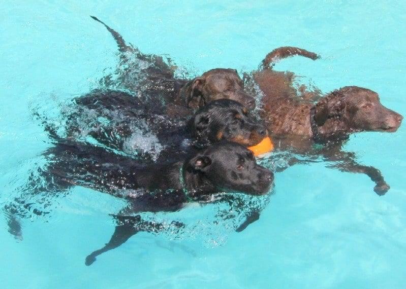 aggressive dogs sacramento