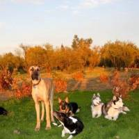 Looking for Service Dog Training in Sacramento or California?