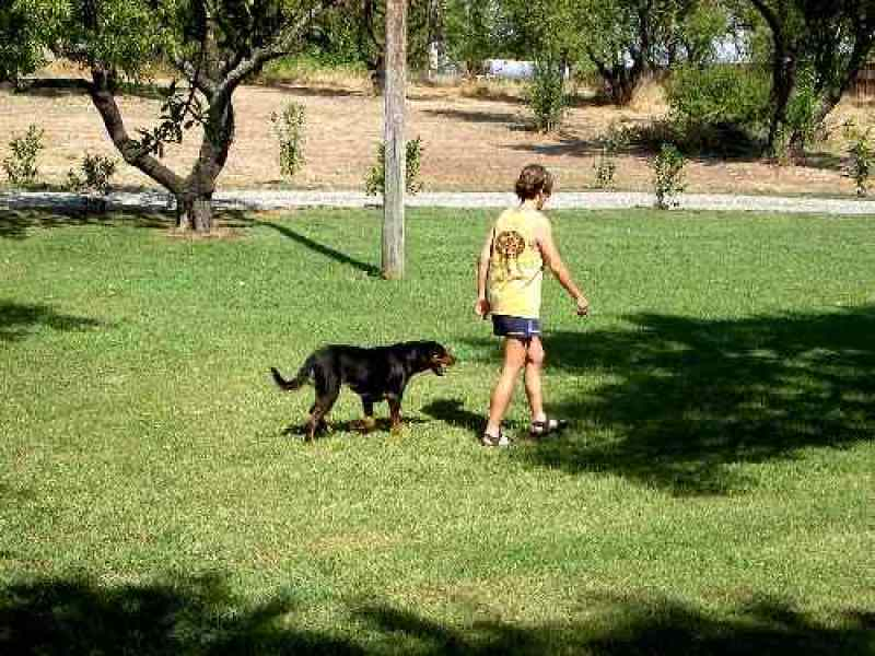 best service dog training