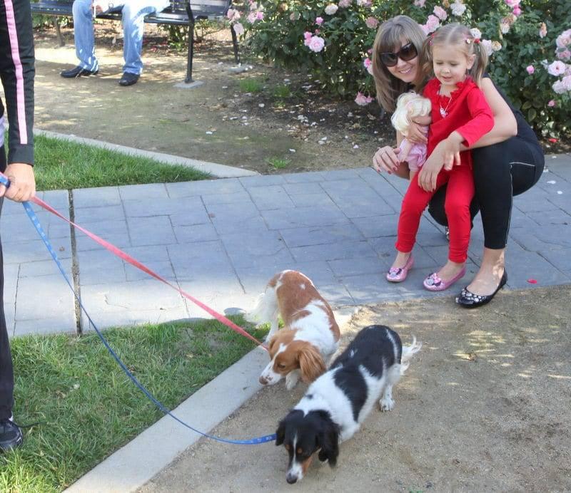 dogs on heel image