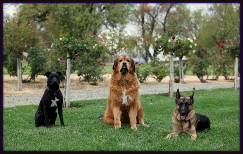 best dog boot camp sacramento