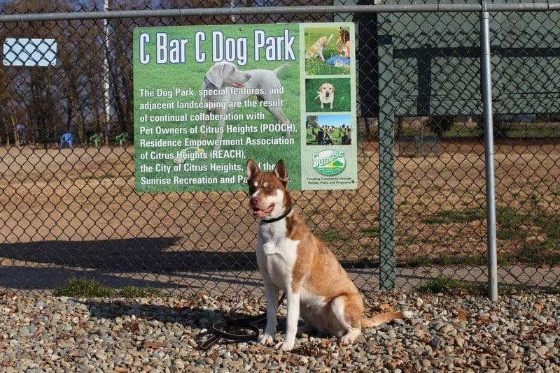 C Bar C Dog Park