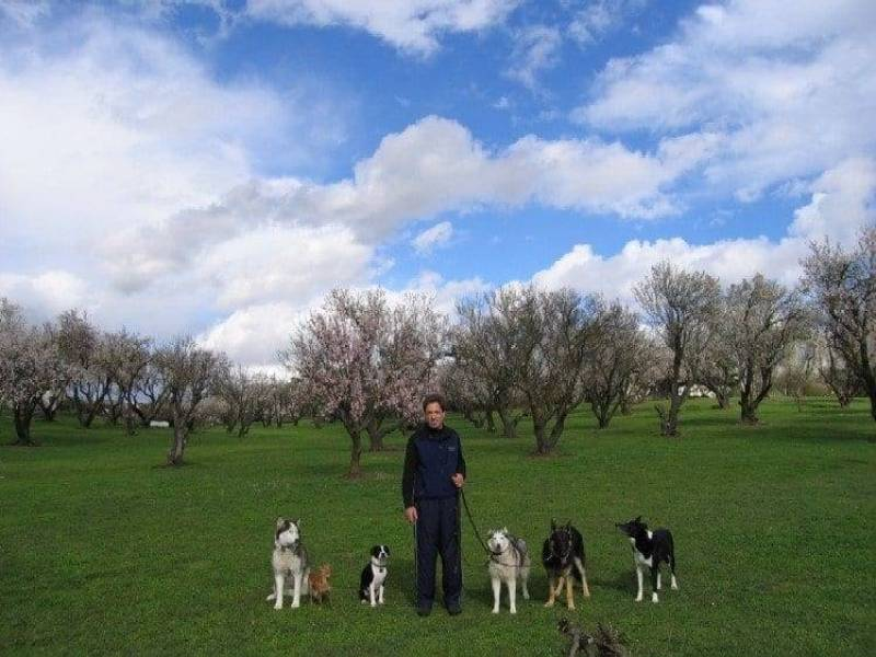 dog trainer sacramento