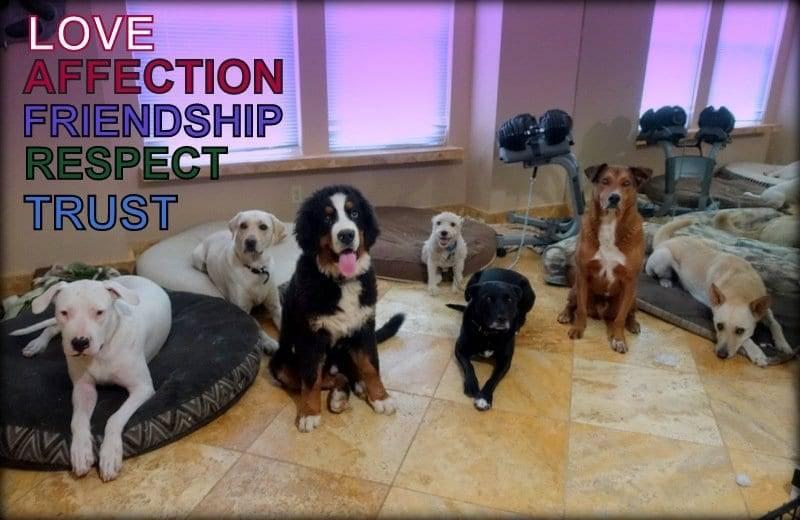 send away dog dog training in sacramento