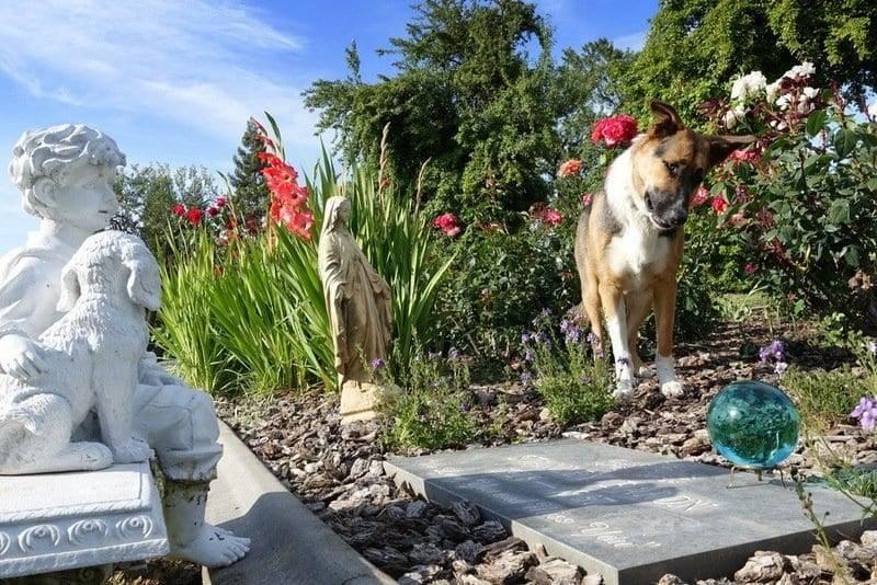 carmel dog trainers
