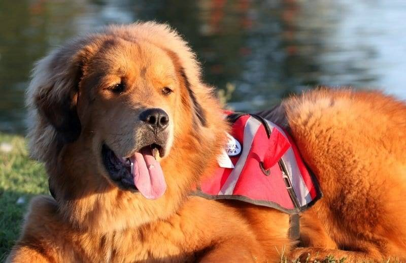 Best Dog Trainers Sacramento