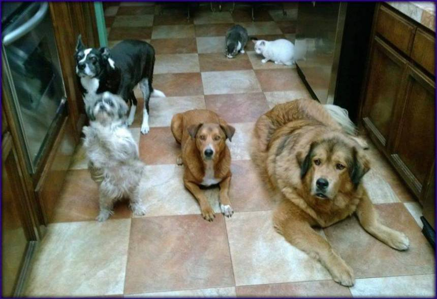 sacramento dog trainers