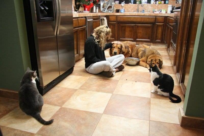 The proper attitude for dog training