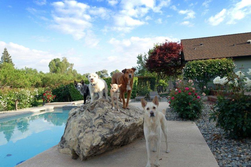 Best Service Dog Breeders