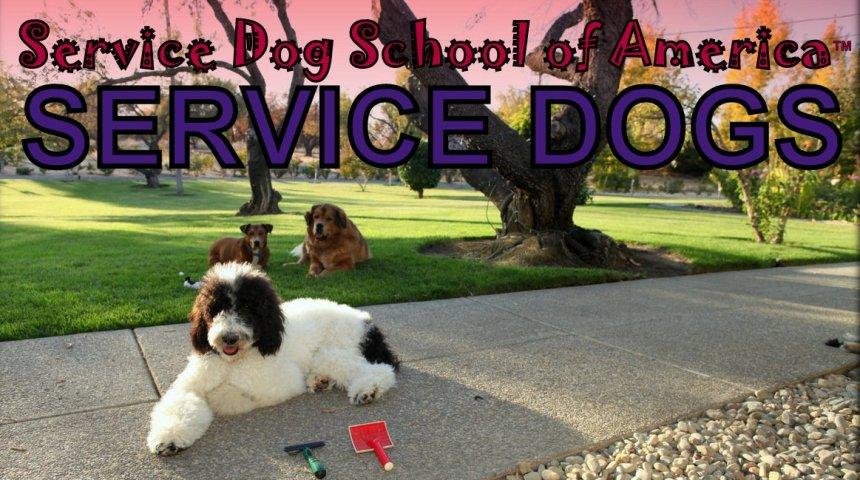 Service Dog School of America