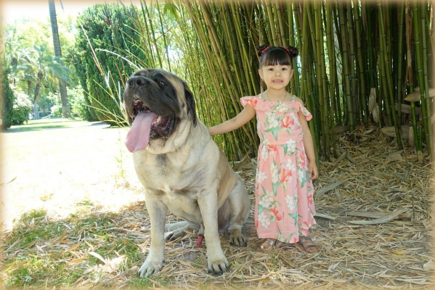 Emotional Support Dogs and Children Sacramento
