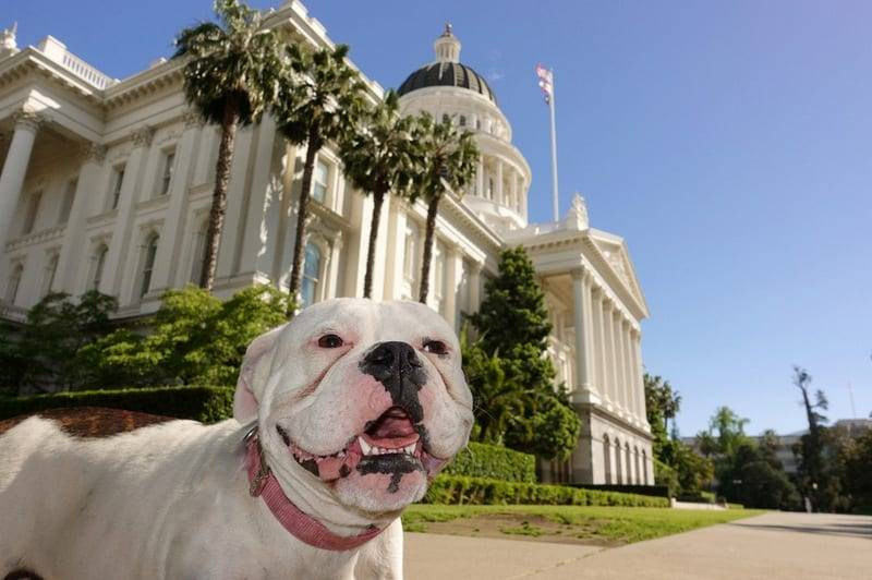 Service Dog School in Roseville, CA