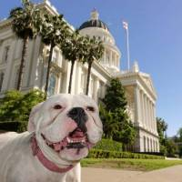 SERVICE DOG SCHOOL | CALIFORNIA