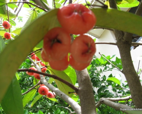 Chambakka / Rose Apple