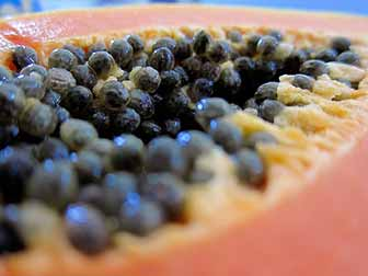 Papaya Seeds Pregnancy