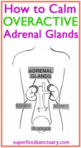 Do you what to learn how to calm overactive adrenal glands? Then you're on the right page – this article looks at ways to beat adrenal fatigue and normalize your system.