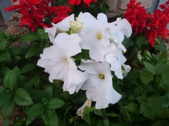 Цветок в сумерках (HDR)