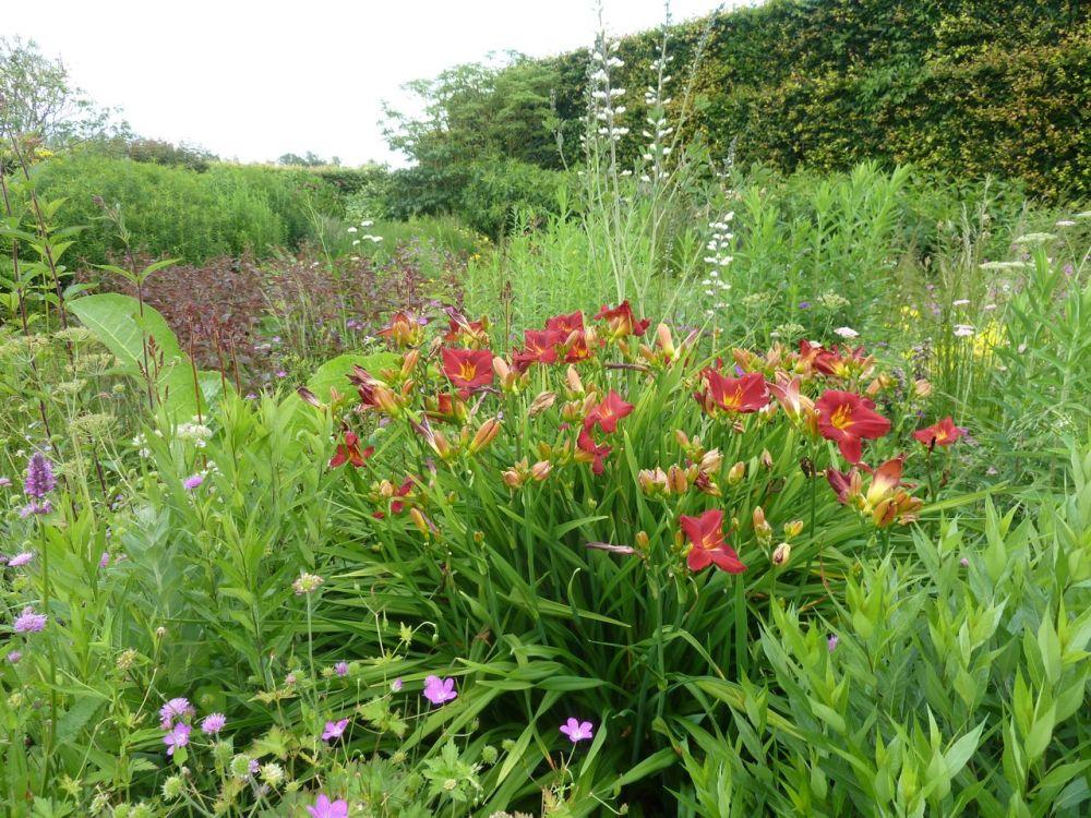 Oudolf's Gardening Inspiration (4/6)
