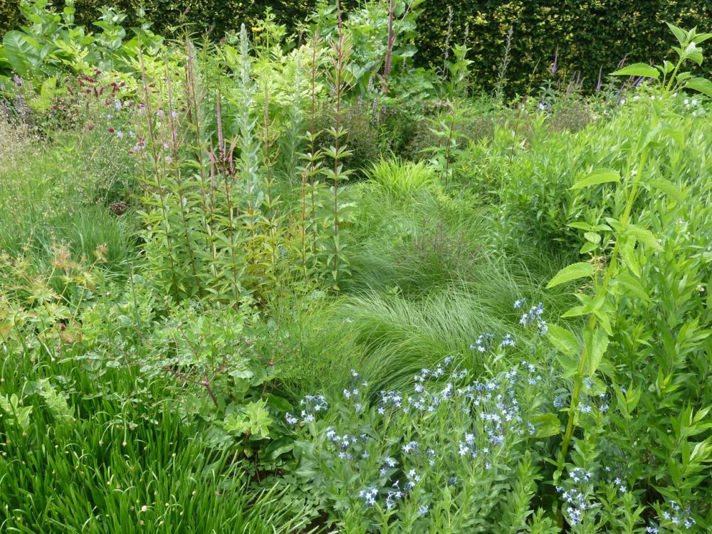 Oudolf's Gardening Inspiration (6/6)