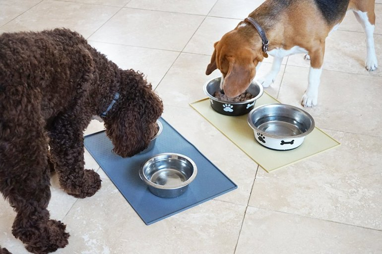 The Best Feeding Mats for Dogs and Other Pets