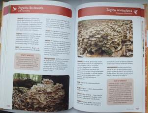 Atlas z grzybów