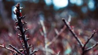 Darmstadt - Waldfriedhof - Pflanzen #1