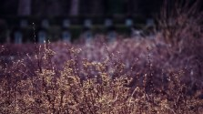 Darmstadt - Waldfriedhof - Pflanzen #3