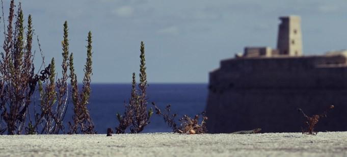 Eidechse mit Wachturm im Hintergrund bei Valetta
