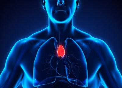 Der Thymus: Klopf Dich runter – entspannt und stark mit der Thymusdrüse !
