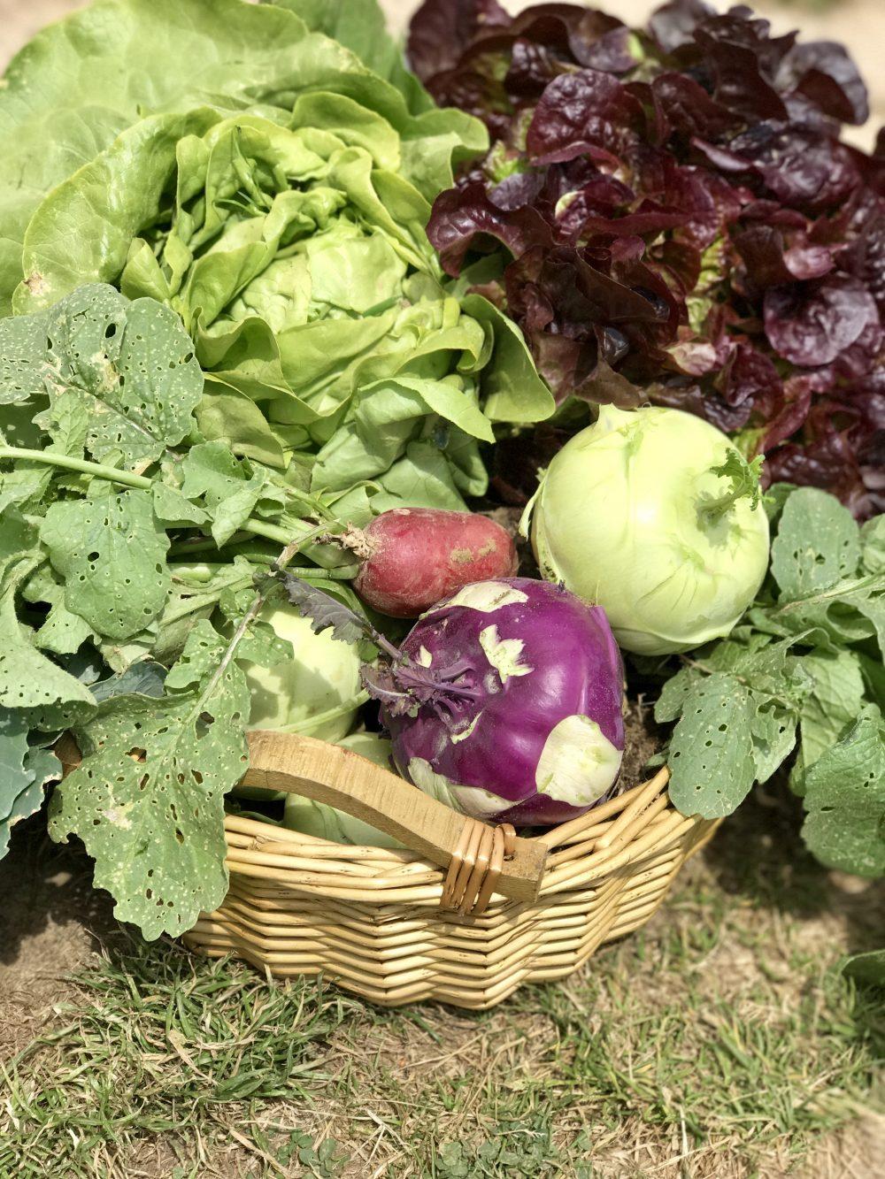 Die 1. eigene Ernte: Gemüse