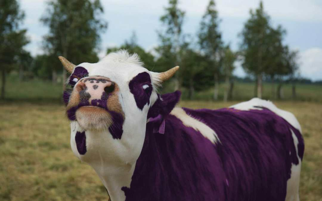 Back-To-School Anxiety: Tips on Herding the Purple Cow