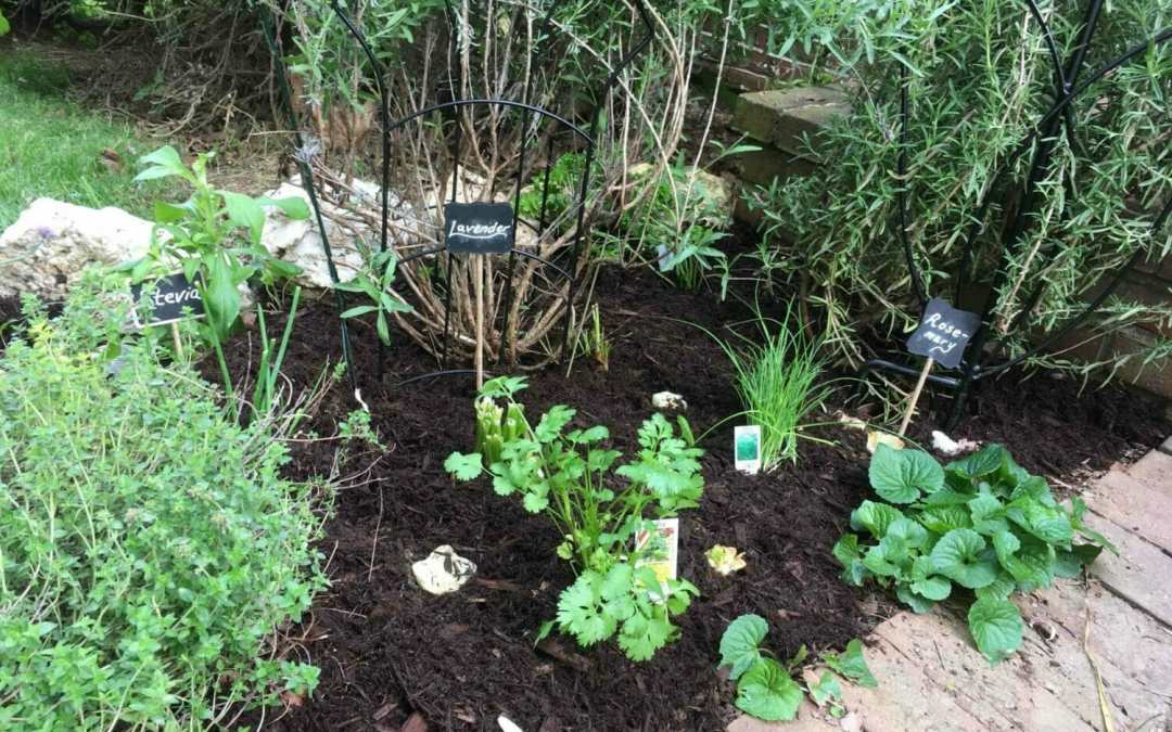 Why Your Kids Will Love A Tasting Garden