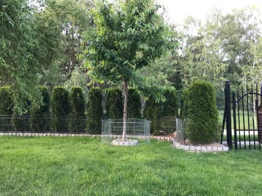 płotek, siatka, ogrodzenie zabezpieczające drzewka, krzewy, iglaki i kwiaty w ogrodzie - przykład zastosowania