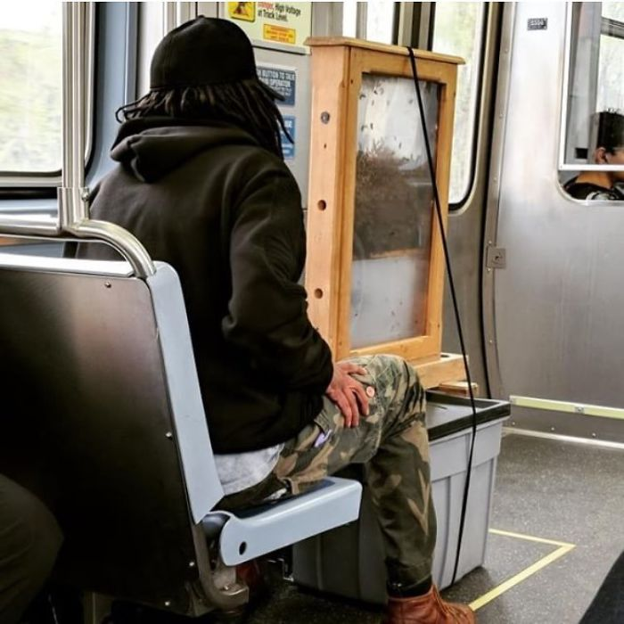 A Guy Gets On CTA (Chicago) With A Colony Of Bees...