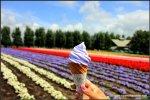 Lavender Soft Serve Icecream