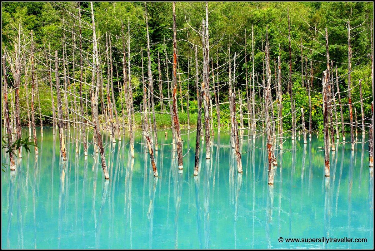 Blue Pond Biei Hokkaido