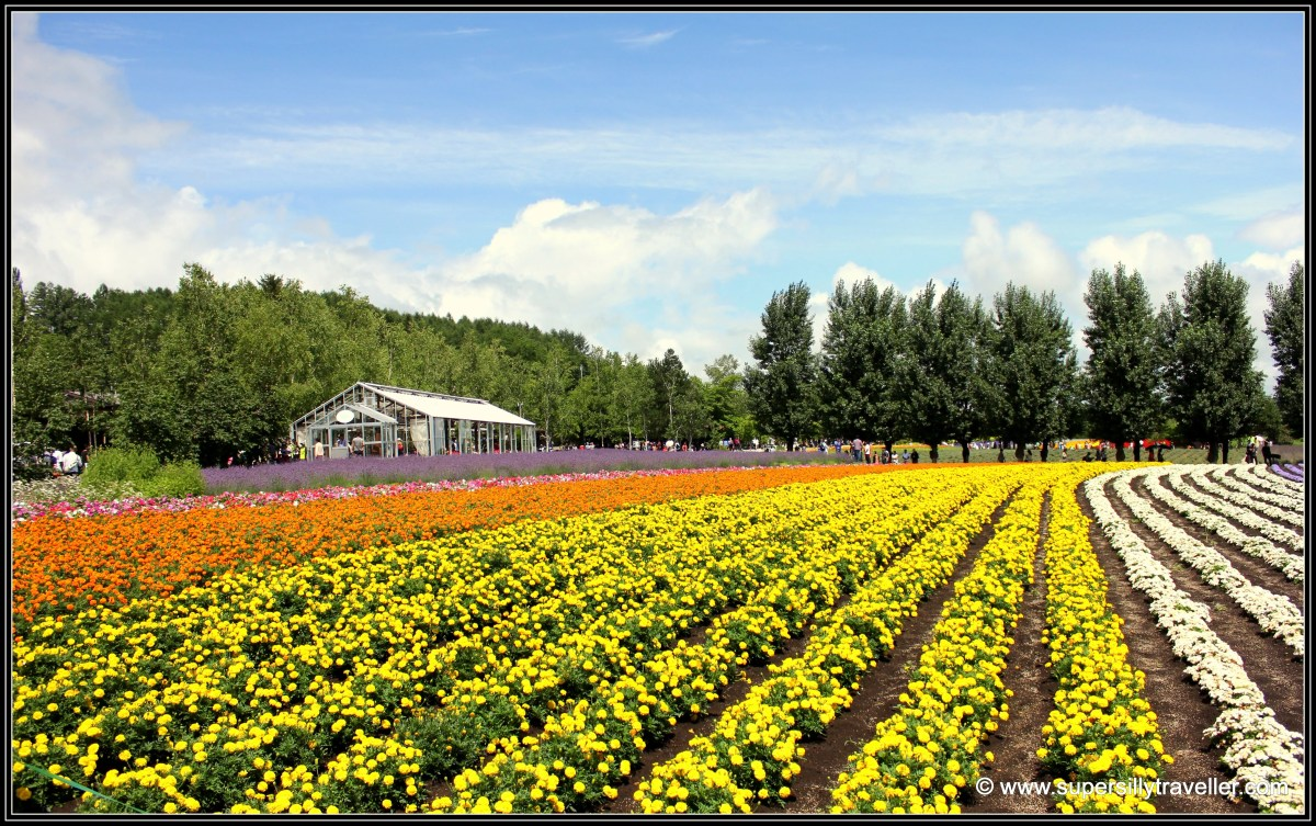 Flower bed Furano