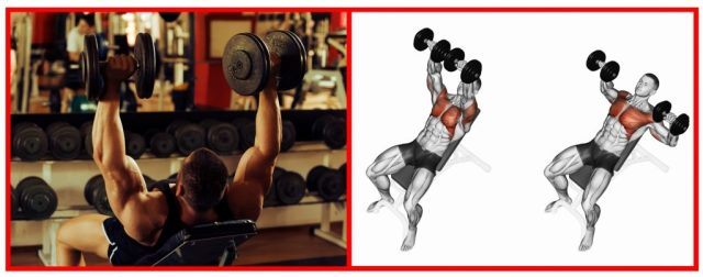 Dumbbell Chest Press. Resistance Training. Chest exercises.