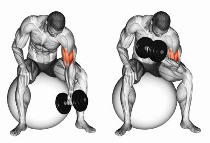 Isolation exercises. Biceps curl. Resistance Training.
