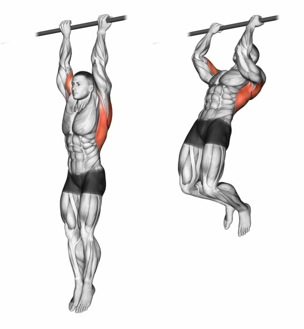 Chin ups. Pull Up progression. Upper body exercises. Back exercises. Lat workouts. Shoulder exercises. Arm exercises.