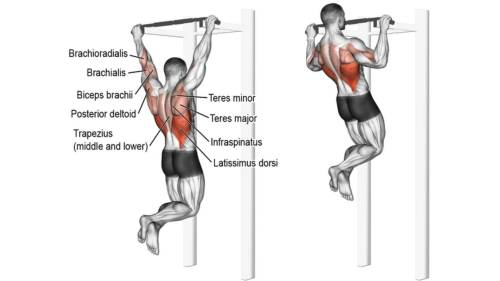 Pull ups. Pull Up progression. Upper body exercises. Back exercises. Lat workouts. Shoulder exercises. Arm exercises.