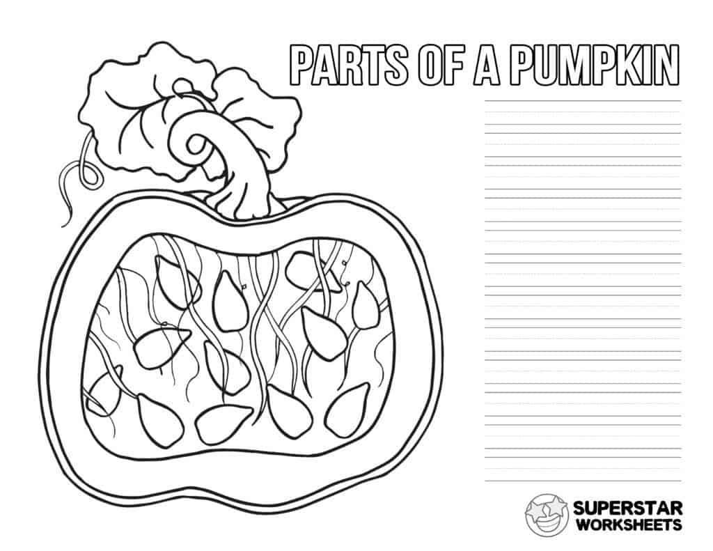 Parts Of A Pumpkin Worksheets