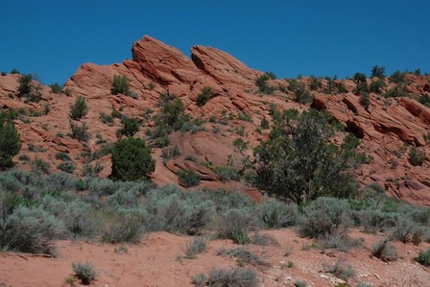 Picture of Arizona Desert