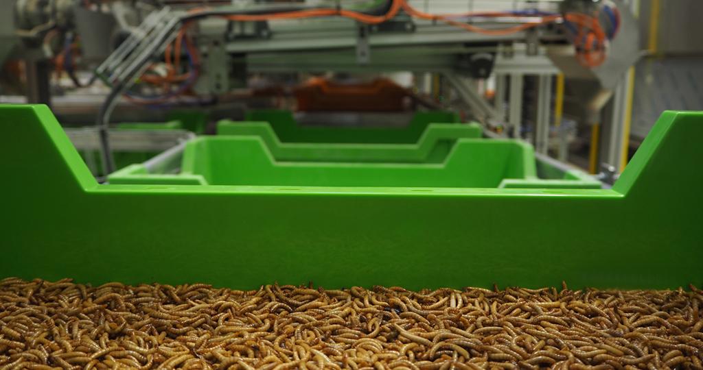 Ÿnsect: nascimento de uma nova indústria agro-alimentar